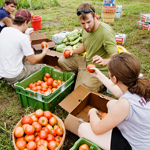 Students picking tomatoes at sustainable farm